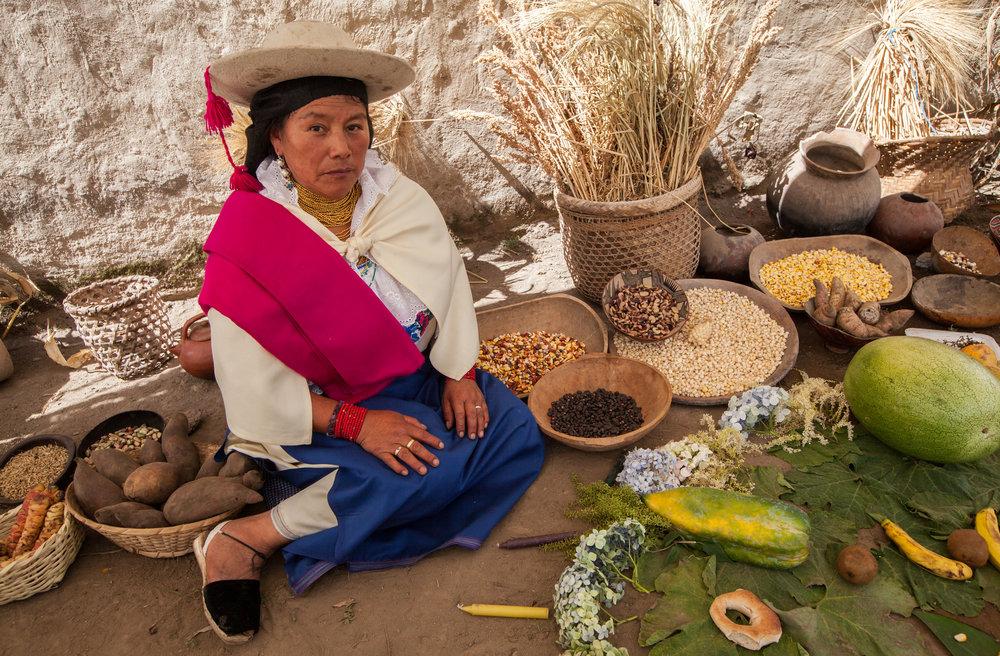 """Josefina Lema, Mojandita, Otavalo, Ecuador. """"Tenemos que trabajar la madre tierra. Por eso, eso digo a mi familia.Siempre decimos pues aunque los jóvenes están estudiando, van a necesitar el barriga de nuestras granos, tenemos que trabajar. Por eso es importante que los jóvenes siempre están en contacto con la pachamama, con madre naturaleza y madre tierra. Tenemos que ir capacitando y informado a todos. Tenemos que ir socializando a los jóvenes.Eso yo digo pues, siempre es necesario seguir produciendo, seguir capacitando, seguir multiplicando para los jóvenes también. Y tenemos que seguir cuidando nuestra semillas. Hemos luchado contra de libres comercios,hemos trabajado contra este propuesta de ley que el gobierno quiere poner para prohibir el intercambio de semillas.Hicimos una caminata también de aquí hasta Quito para resistir este ley que están poniendo.Ahora también tenemos que seguir peleando para defender nuestras derechos y derechos de las semillas. Tenemos que trabajar, especialmente hoy invitaría a las compañeras a seguir defendiendo. También trabajo en tema de salud, tenemos que trabajar primero en los alimentos. Porque si no hay alimento, tenemos que estar comiendo bien, tenemos que tener salud bueno. Si no comemos bien, vamos a seguir estando enfermo. Todo eso pasa cuando no hay semillas vivas y granos vivas. Eso es. Eso es el trabajo."""""""