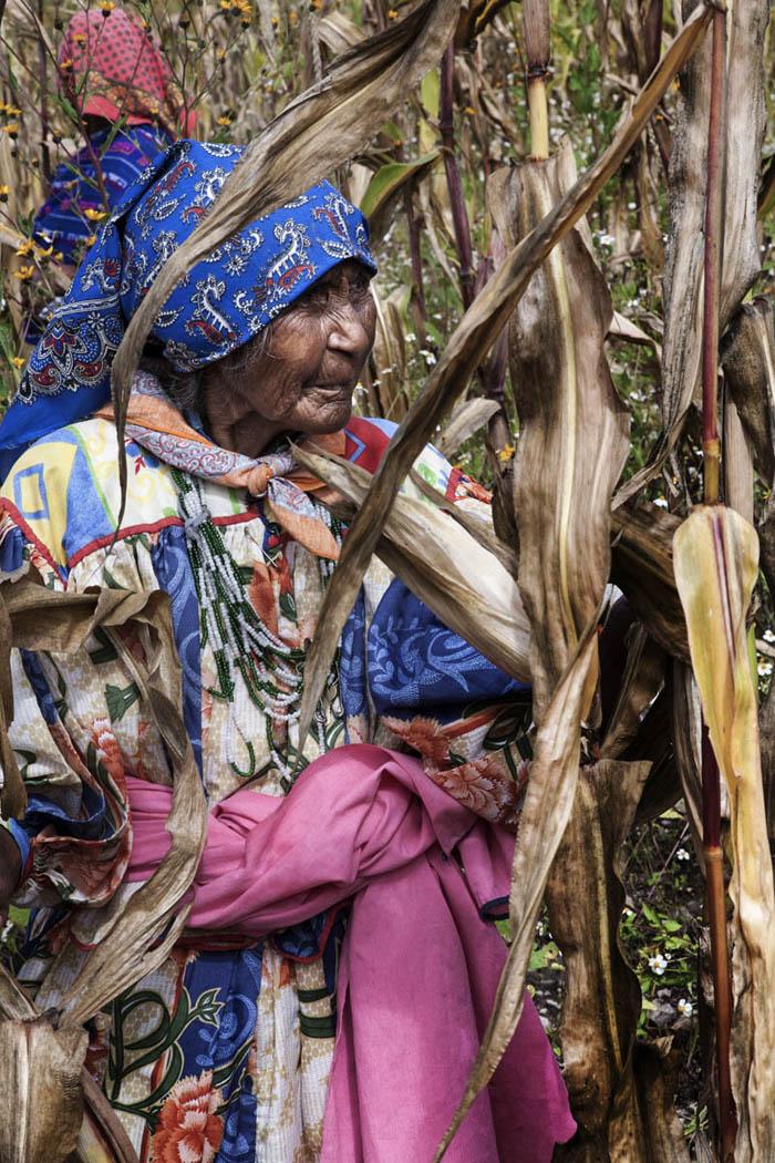 Cerca del pueblo de Norogachi, Chihuahua, en la Sierra Tarahumara de México, esta mujer participa en la identificación de buenas mazorcas semilleras para el ciclo agrícola entrante, aplicando conocimientos de un taller sobre el método masal impartido en su lengua por un miembro de su comunidad.