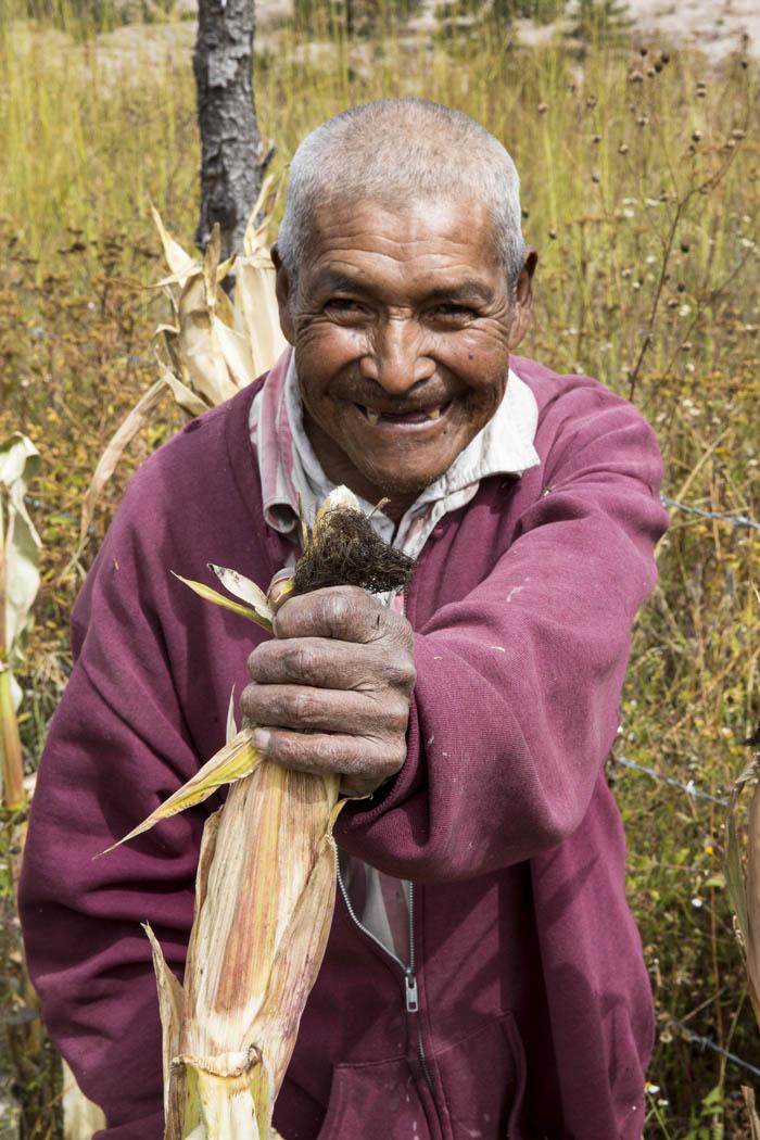 """El maíz indígena    Descendiendo del cerrro,  por la puerta abierta,  desde la ventana,  admiro el maíz  que danza en la parcela,  con el silbido del aire.  Cerca de la milpa, el trino de pájaros  Alegran los oídos y despiertan el corazón,  para sentir esa hermandad con la vida de la naturaleza,  principalmente con el maíz.    El rarámuri siembra su maíz  en la montaña, en laderas, en las lomas frescas,  en los meandros de los ríos y arroyos.  el maíz se adapta en diferentes suelos,  diversos climas micro sistémicos;  por eso en los surcos han surgido razas  y variedades de muchos colores, tamaños;  así como las razas indígenas que lo siembran y  lo consumen dando diferentes sabores,  para alimentar la sangre, el cuerpo, el alma, el espíritu de los difuntos,  sin olvidar los consejos,  las sabidurías,  legado de los ancestros y deidades.    El hombre encontró muchos hermanos  en la tierra, las semillas.  El más importante por su versatilidad de adaptación  y cambio genético natural, """"es el maíz"""".  Compartimos el mismo territorio,  la misma agua,  el mismo aliento de los animales y árboles del bosque  el mismo espíritu de la madre tierra,  la misma luz de las estrellas y de la luna,  el mismo calor del sol    Debemos ser respetuosos con el maíz,  pues compartimos las bndades de la tierra y del universo.  Tenemos la obligación de educar a nuestros hijos  con los principios de la vida y enseñar  el respeto por la naturaleza que nos rodea para vivir bien,  con los de arriba, los de abajo,  los que viven lejos y los de cerca.  Solamente viviendo sin diferencias, será justo lo justo;  de lo contrario habrá desgracia, tristeza, dolor,  camino seguro al final de nuestra era, por nuestra indiferencia.  Por todo, arriba la vida,  que viva el maíz,  veneren a los ancestros y deidades,  respeten el germen de la tierra,  la esperanza es nustro consuelo y la luz a seguir.      Pedro Turuséachi Sevórachi"""