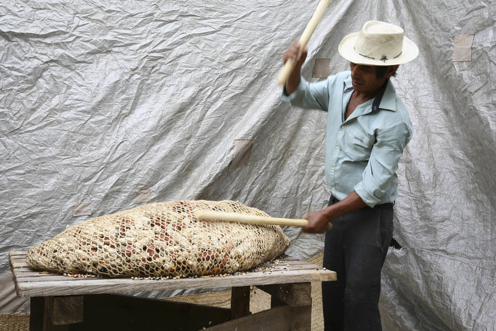 Margarito desgrana el maíz a palazos, algo que nos comentó que algunas personas encuentran como una manera algo brusca de tratar al maíz.