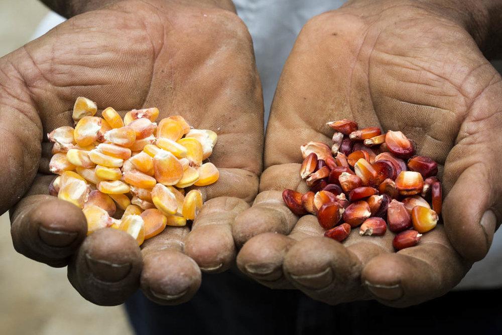 Sin las manos campesinas, no hay semilla, sin semilla no hay manos.