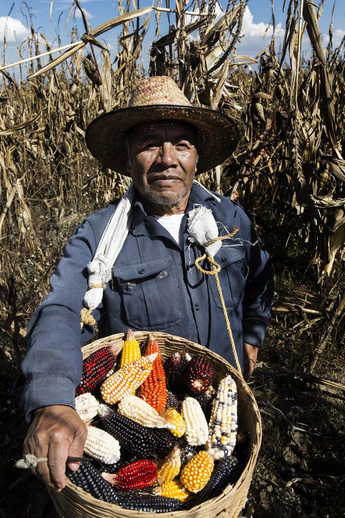 Don Andrés siembra todos los colores de maíz porque, además de alimentarse de la semilla, elabora bellos cuadros ceremoniales a base de semillas.