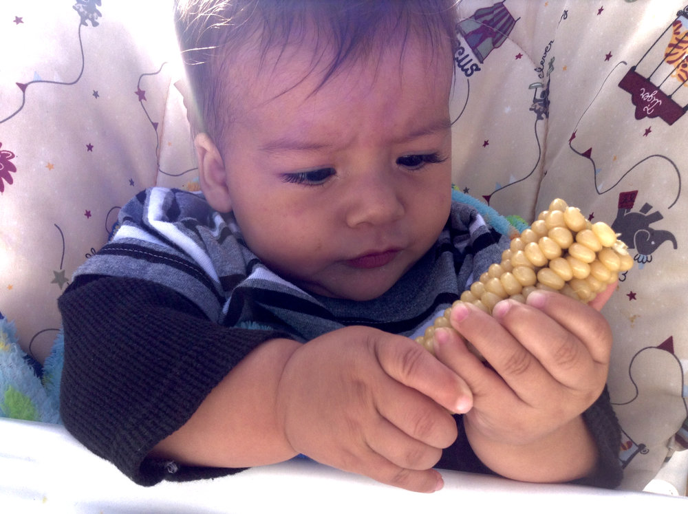 During the annual adobe over roast of native corn (horneada) in San Luis, Colorado (USA), Fabian Quintana, son of a Chicana land grant heir mother and a P'urhepecha father, gets this first taste of chicos corn.