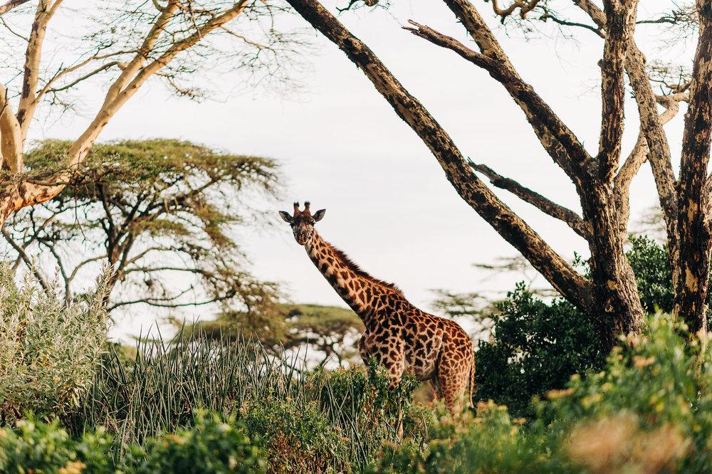Anna-Hari-Photography-Safari-Elopement-Kenya-Wedding-Photographer-Kenya-77.jpg