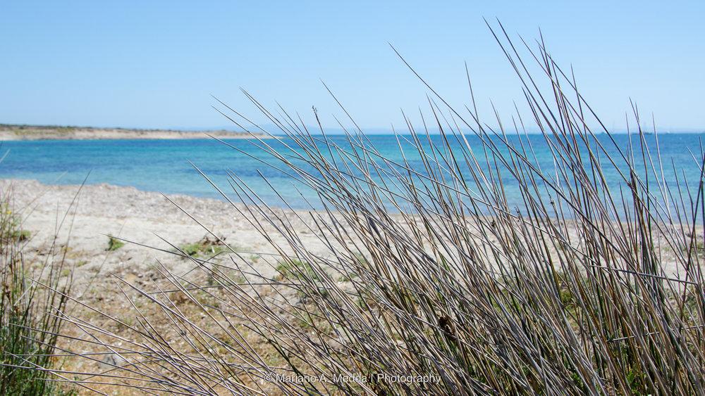Sardegna2016__090816_587.jpg