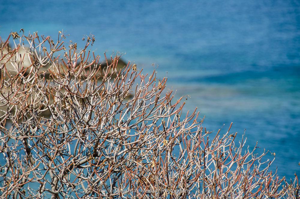 Sardegna2016__090816_664.jpg