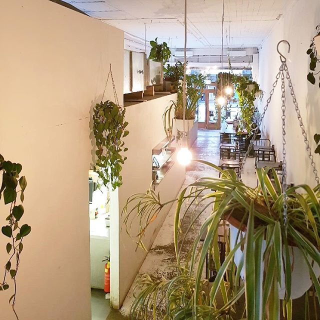 🌱🌿🍃 plants by @looseleaf__ 📷 @jarrodthebarrister  #plantlife #indoorplants #plantsmakepeoplehappy