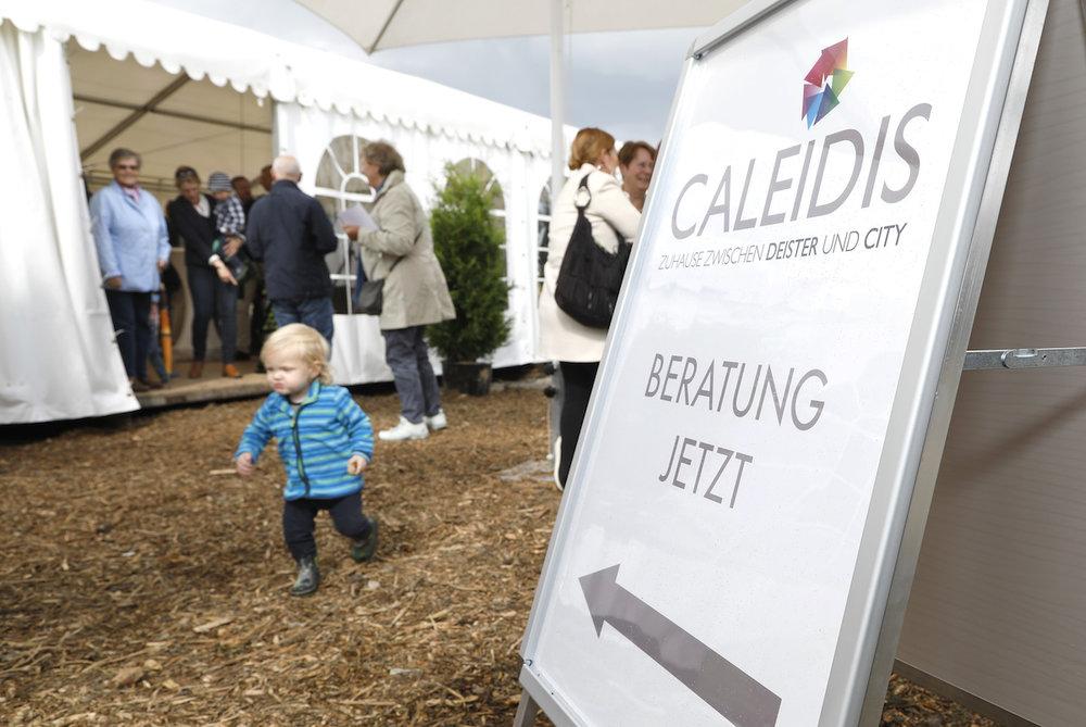 Caleidis2.jpg