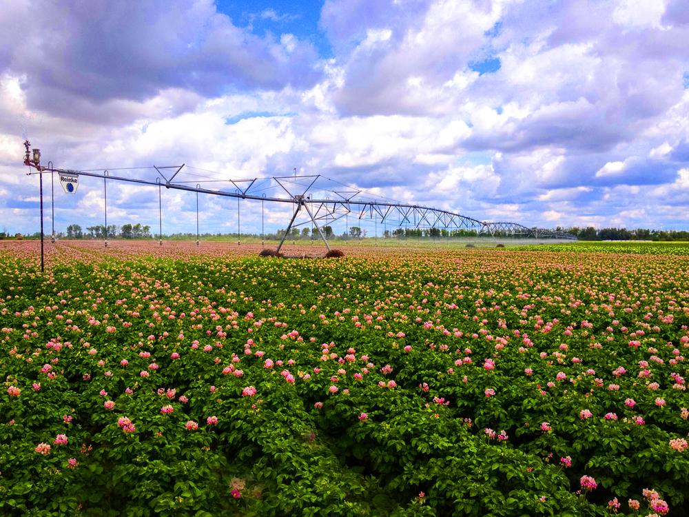 11239455746_1b14a31f5c_o?format=1500w center pivot irrigation wiring diagrams center pivot valmont Black and White Irrigation Pivot at reclaimingppi.co