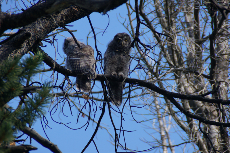 Owls watching over our campsite in the Winds.