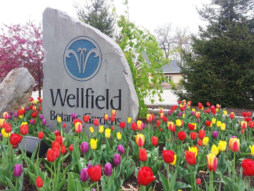 Wellfield Cover Photo.jpg