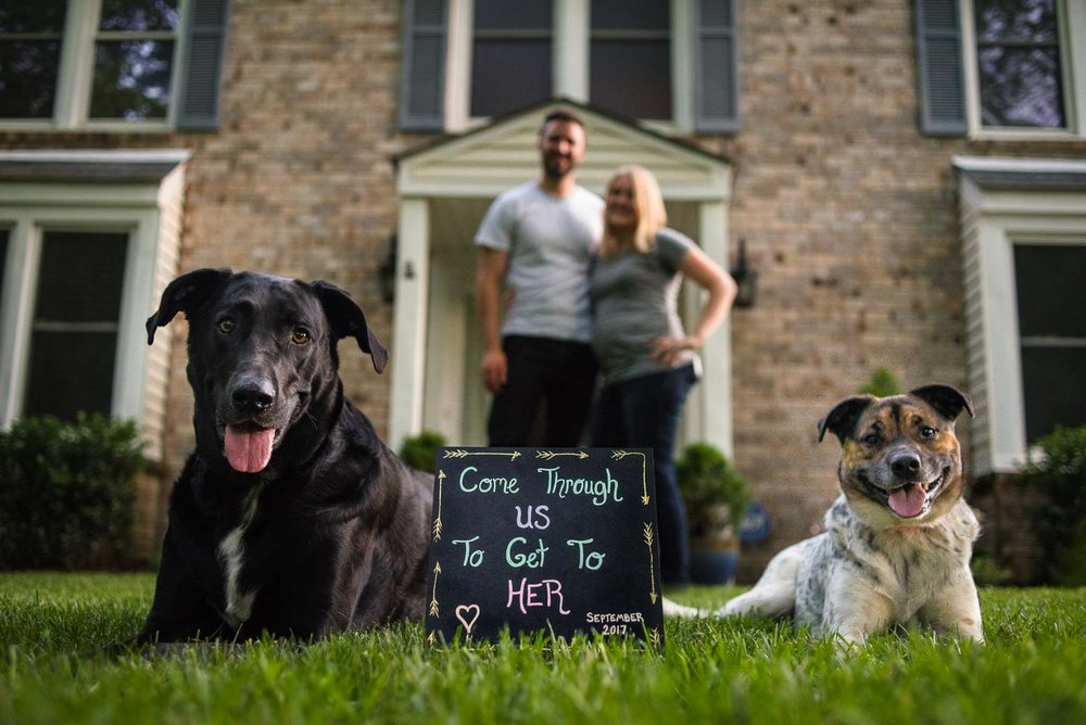 Greg & Jess Photography - Nashville Family Photographer - Dogs