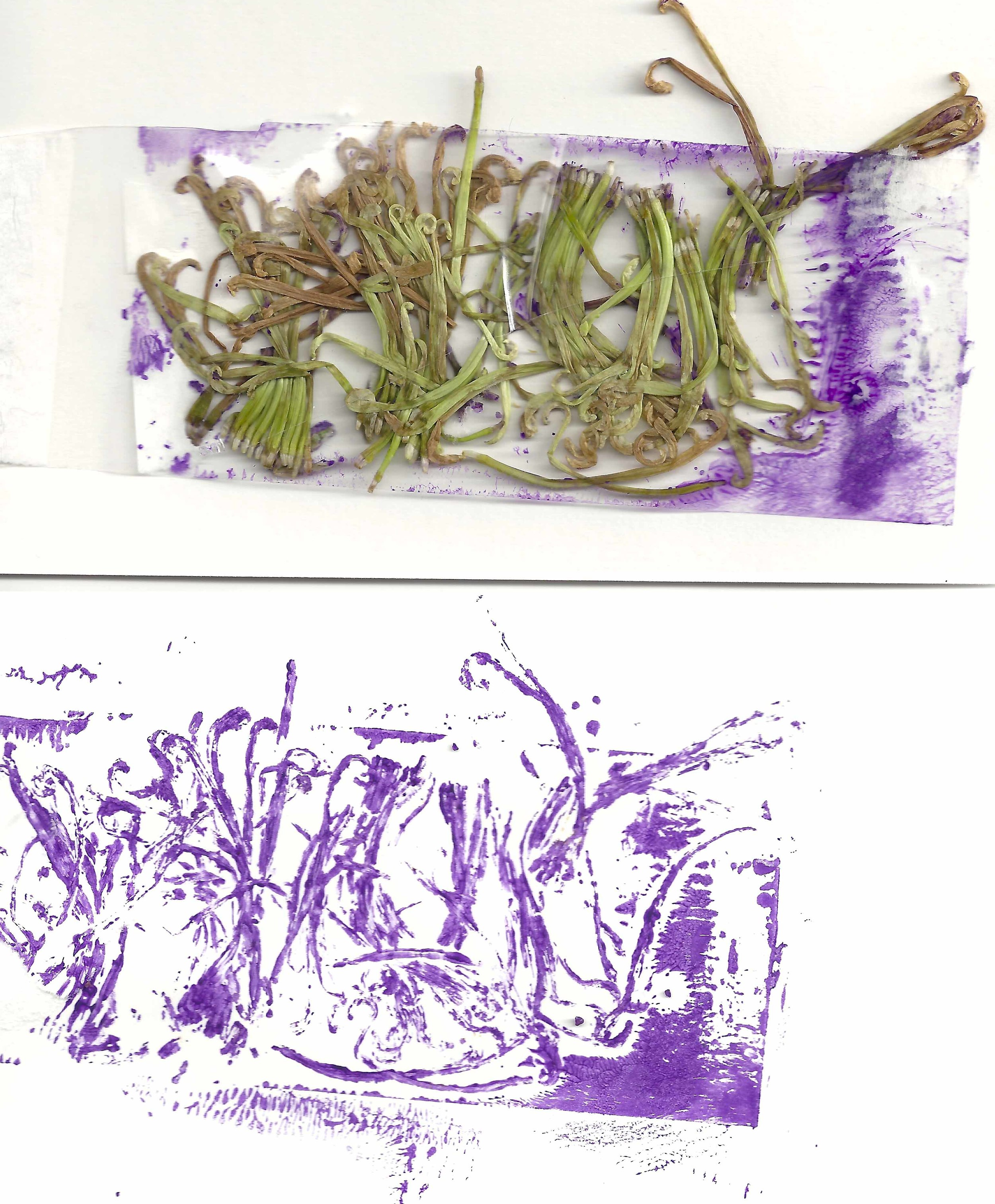 Petals from flowers I killed: I placed the petals onto some packing tape and used my brayer to roll it with paint and transfer it to paper. Then I scanned it in.
