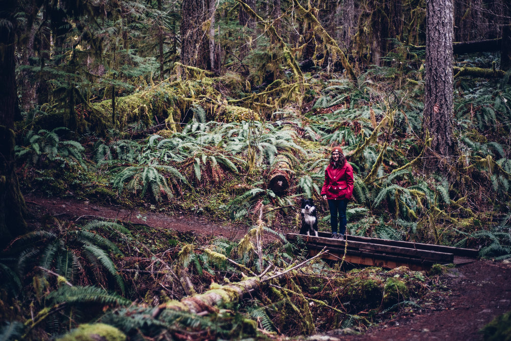 The Cascade Mountains look like a crazy green mountain jungle with hundreds of shades of green in the form of moss, ferns, plants and trees. Being in the forest feels like being in a different world.  Photo by:    Isaac Miller Photography