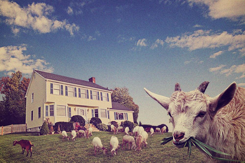 Goatscaping.jpg