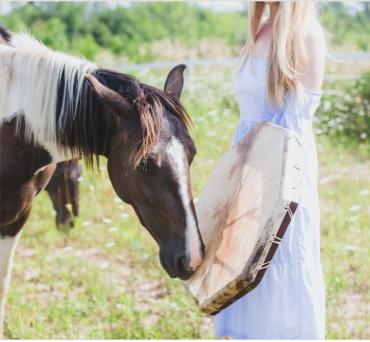 horse wisdom 2.png
