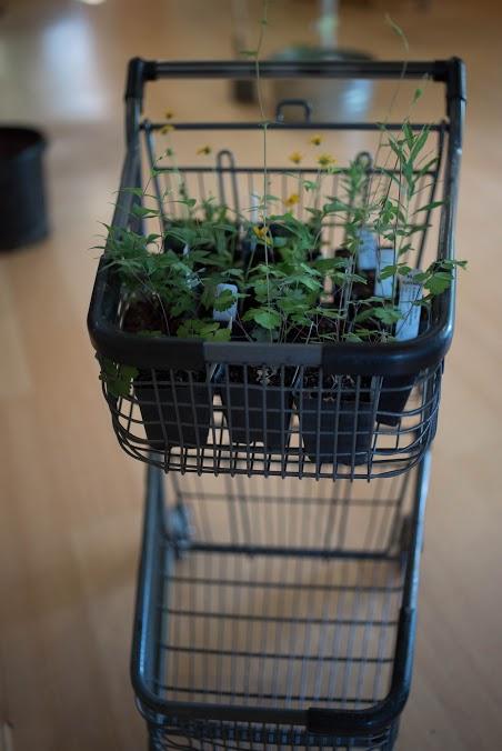 Plant Sale Cart 2017.jpg