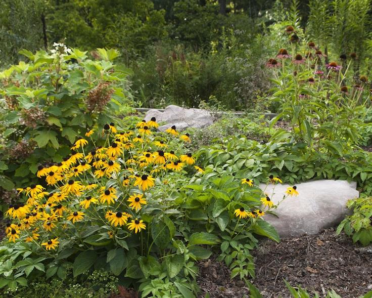 Ruffner_Rain_Garden_0064.jpg