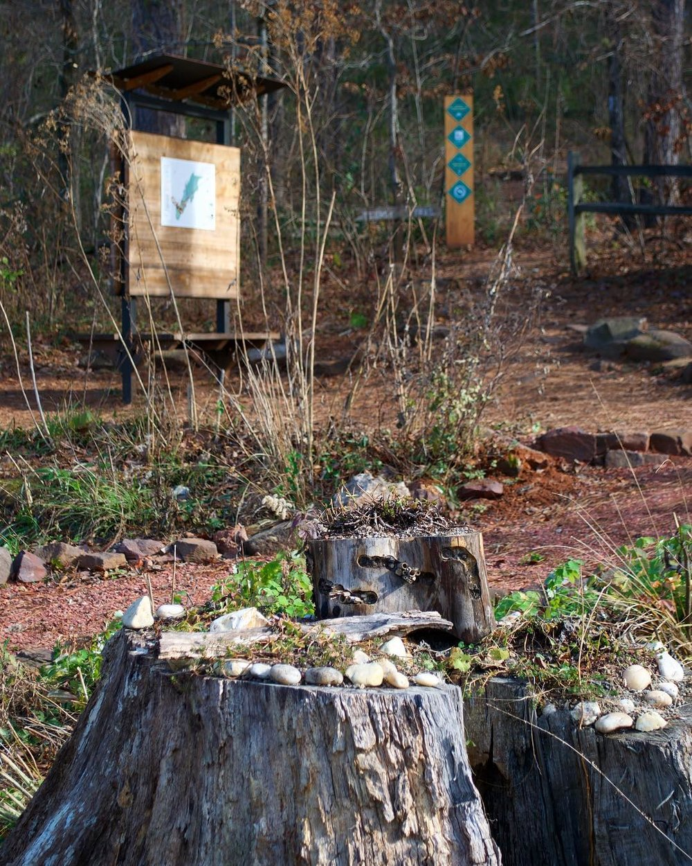 Stump in Habitat Garden.jpg