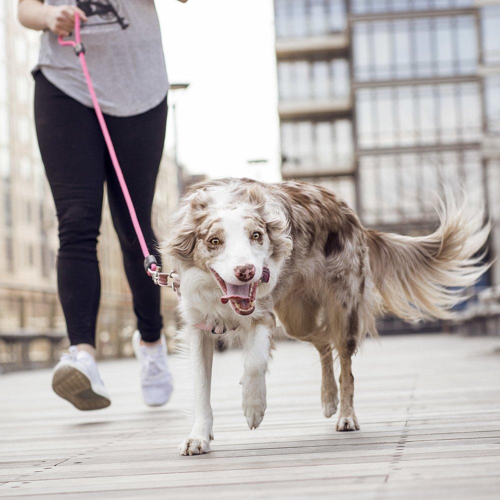 DogParker_Natalie_Siebers_04_2018-1773ns.jpg