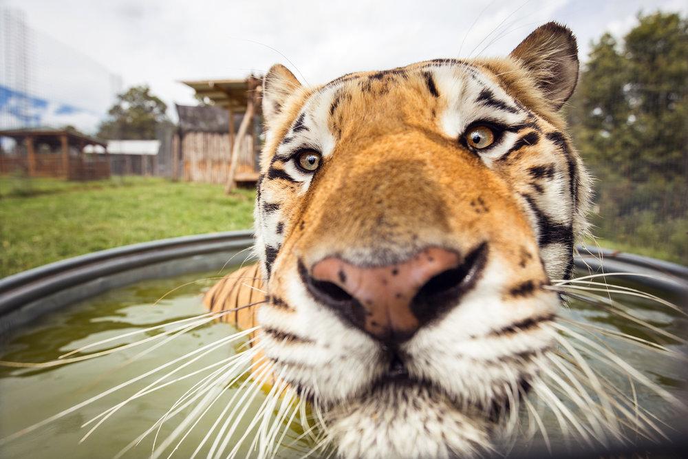 National Tiger Sanctuary -