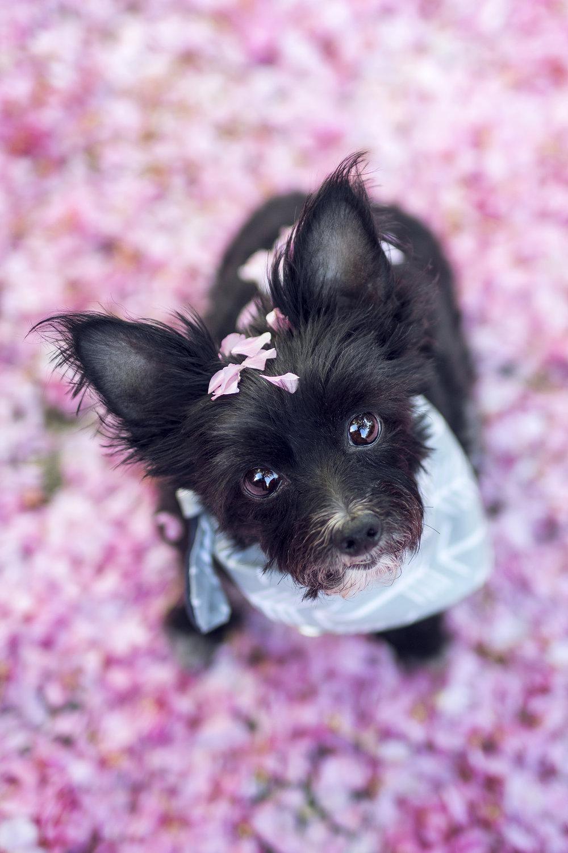 Natalie_Siebers_Sophie_Flower_Petals_05_11_2018-3140ns.jpg