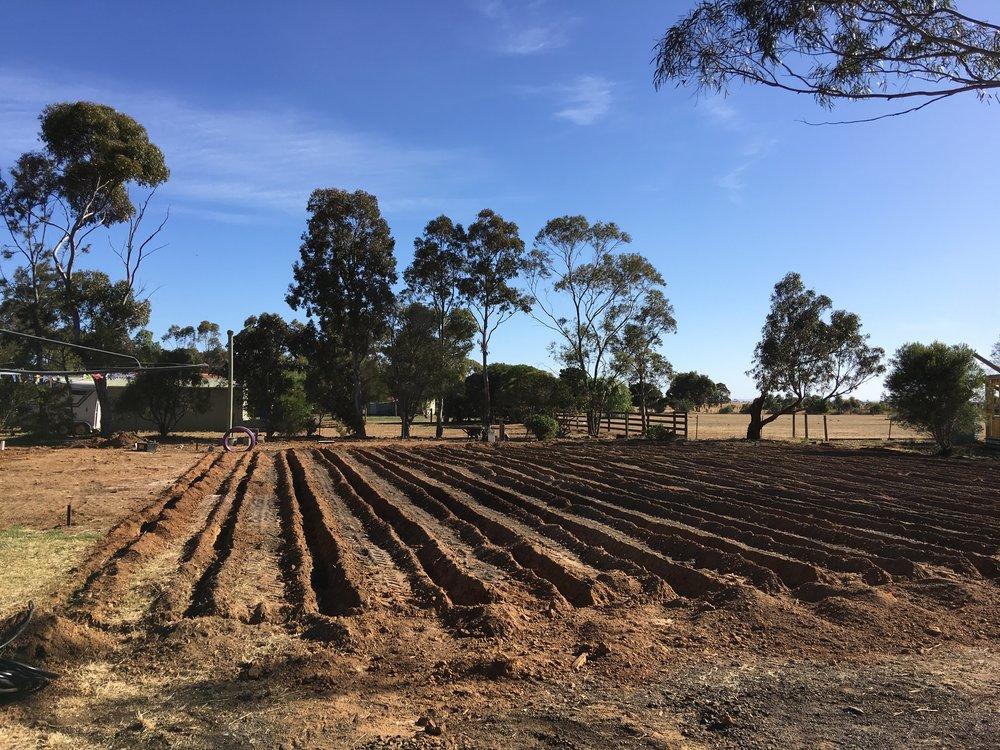 Irrigation Field being installed.