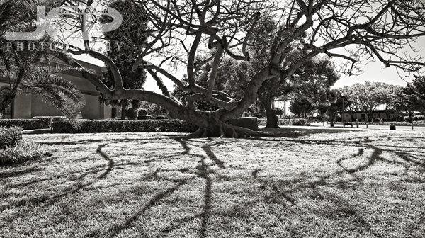 This kapok tree has often been a test subject during my dslr photography lessons in downtown st