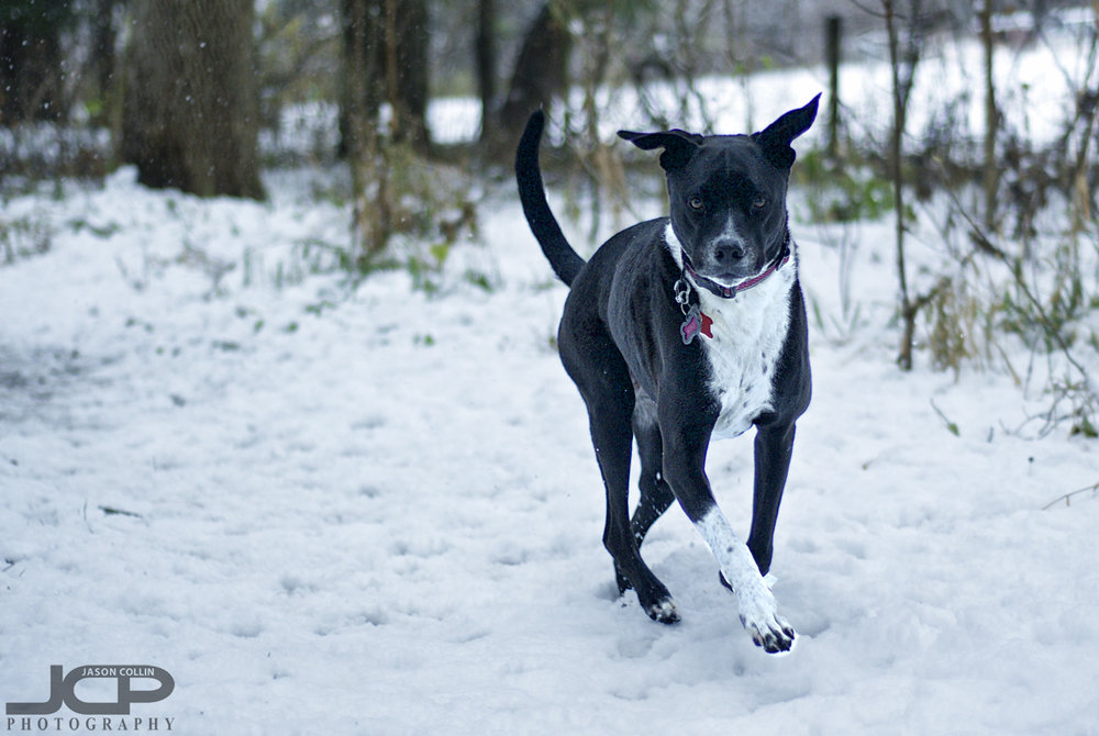 Even on her first day in snow in her life, Kiki is still serious! - Nikon D300 with Nikkor 50mm @ f/2 ISO 200 1/500th