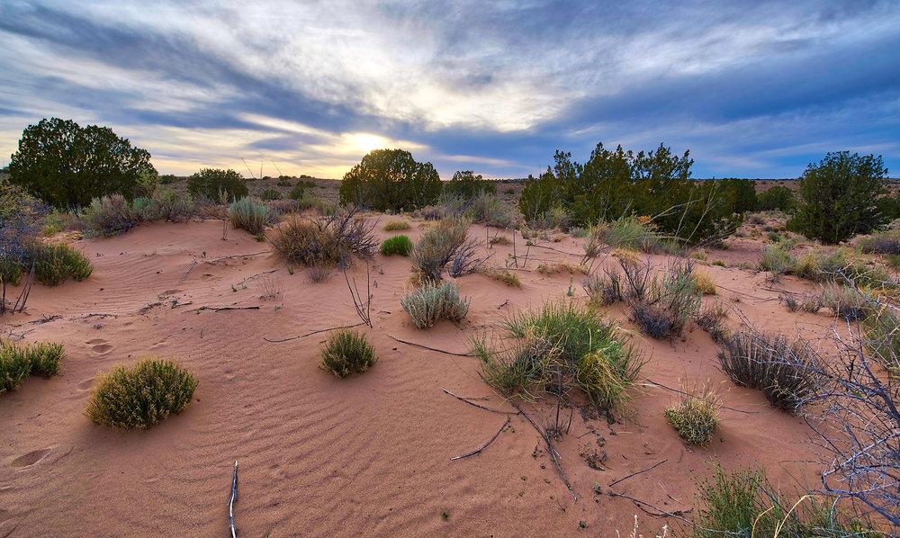 Rio Rancho Sandy Desert