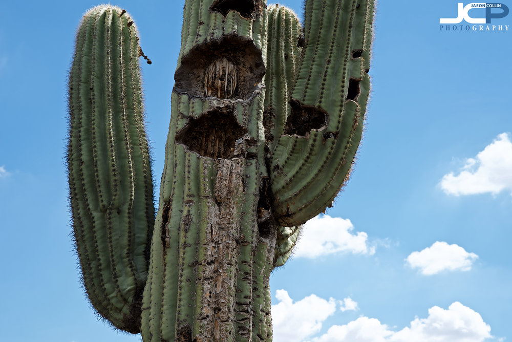 Does this saguaro cactus look like a cyclops with an open mouth and raised arms to you too??