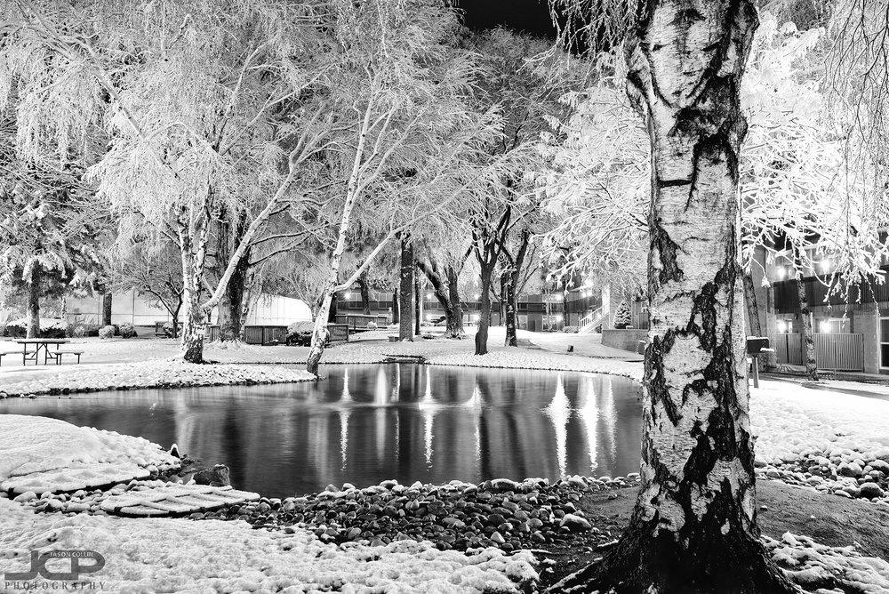On frozen pond in Albuquerque, New Mexico