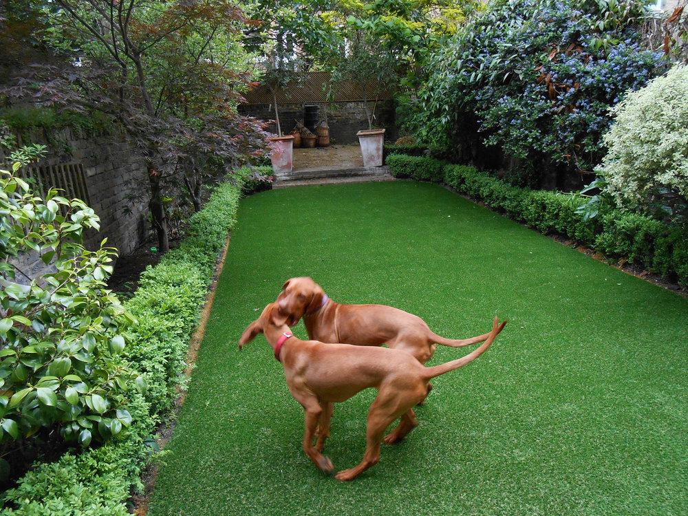Artificial-grass-for-pet-dogs.jpg