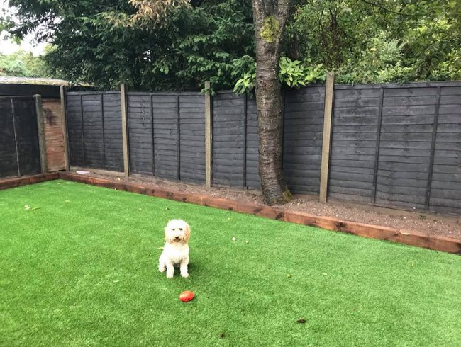 pet-dog-artificial-grass-birmingham.jpg