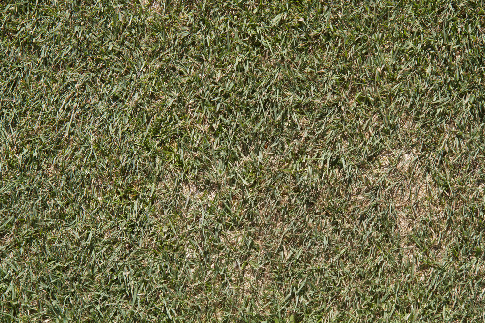 Copy of Untreated Turf