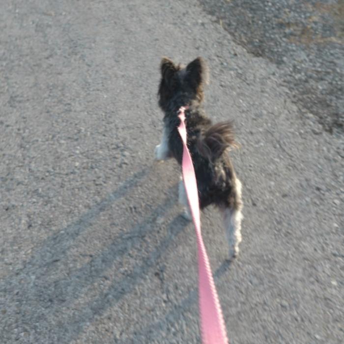 "Annajean's ""coach"", her dog Rat!"