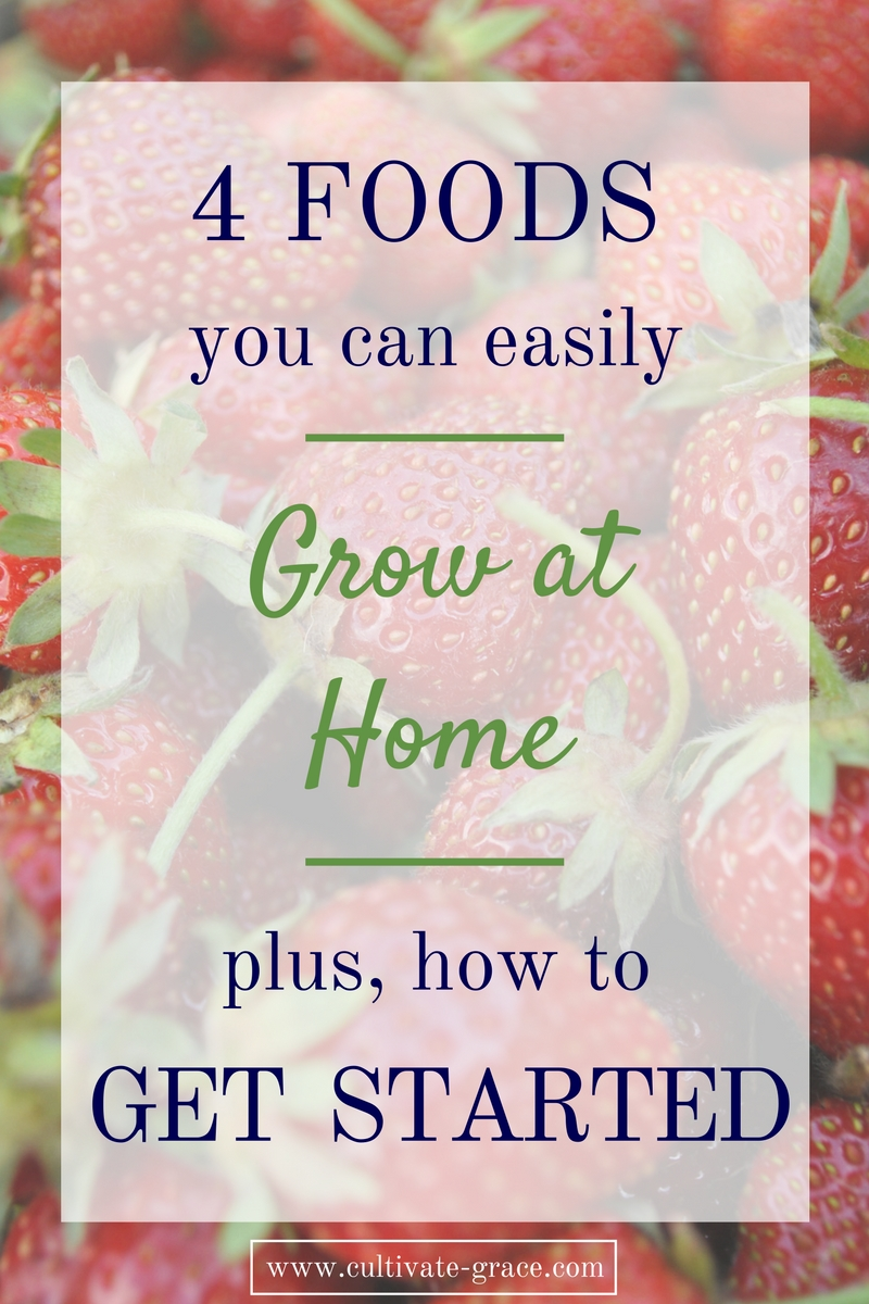 Grow These 4 Foods At Home (And How To Get Started)