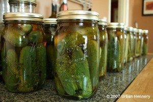 Grandma Steinberger's Dill Pickles