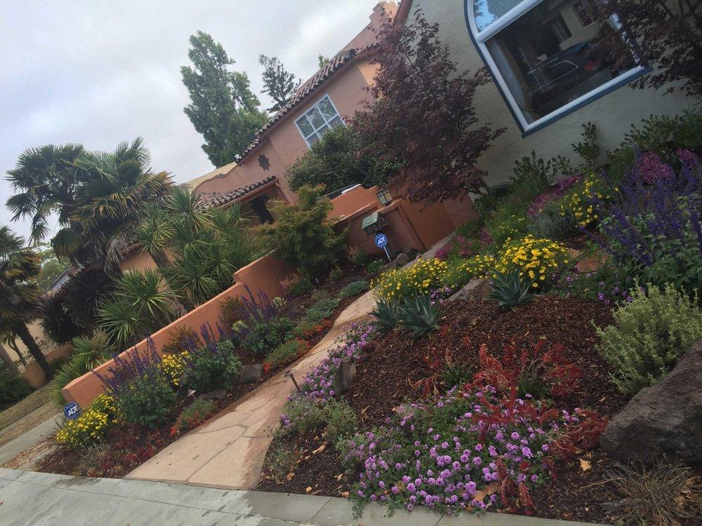 Bay Area Front Garden Landscape