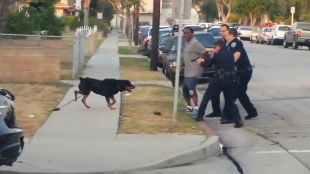 Of Dogs and Men - Hawthorne, CA officer aims at Max.jpg