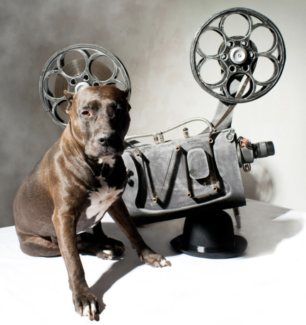 "PLAN A MOVIE NIGHT - Bring ""Of Dogs And Men"" to your city for free!"