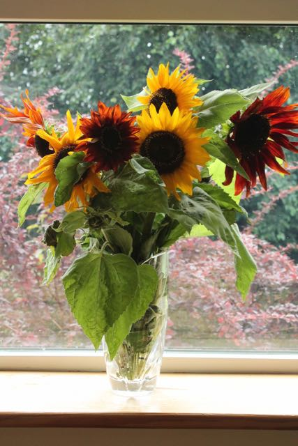 Bouquet of sunflowers, Shillelagh, County Wicklow, 9/16
