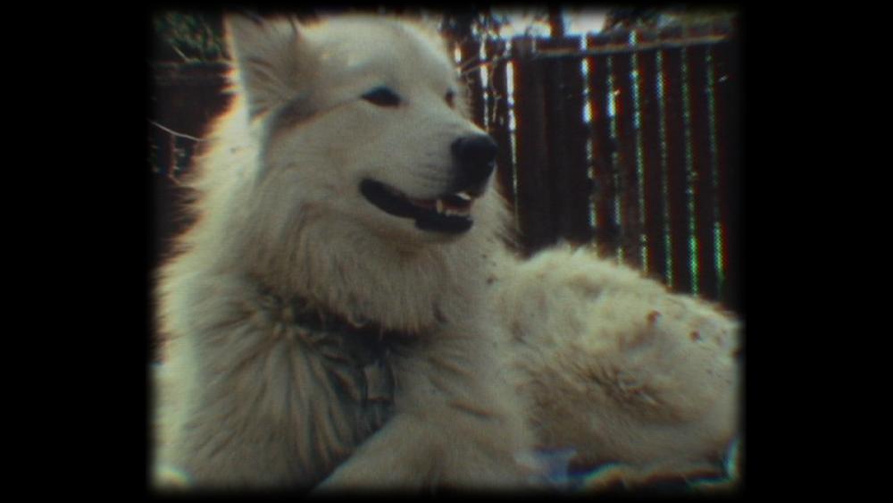 WolfdogMaya.png