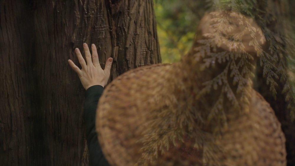 Cedar Tree of Life