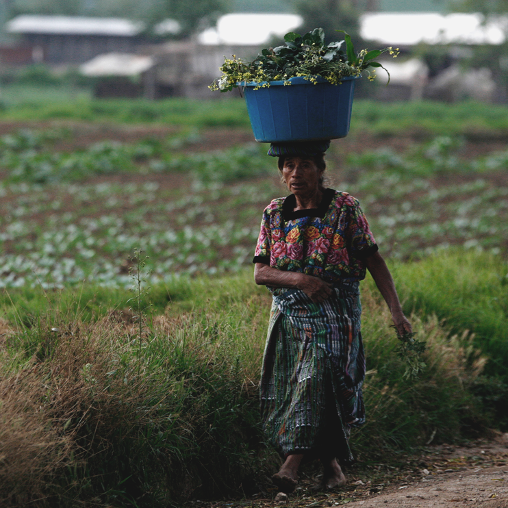 75% of rural Guatemalans live on less than $2 a day -