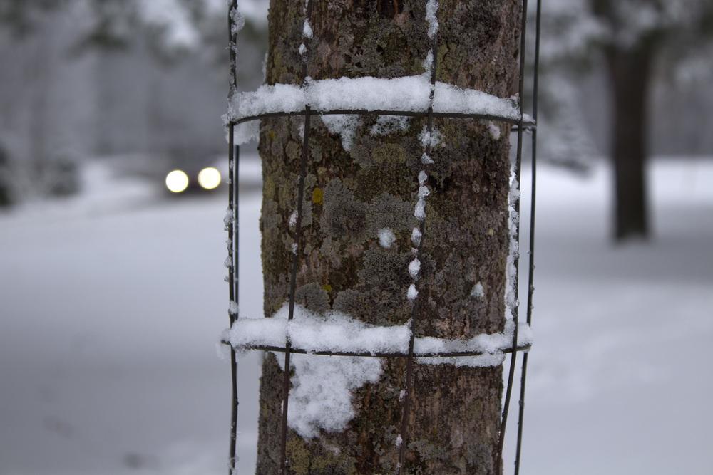 maliqi_woods_tree.jpg