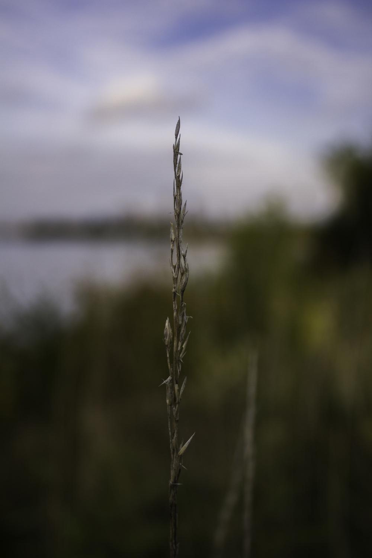 Maliqi.Edgewater_afternoon.blur.jpg