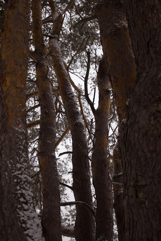 maliqi_woods_trees pic.jpg