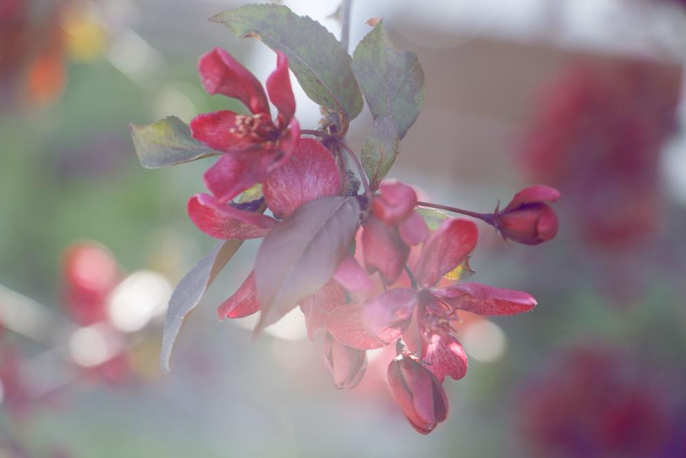 maliqi.flowers.2.jpg
