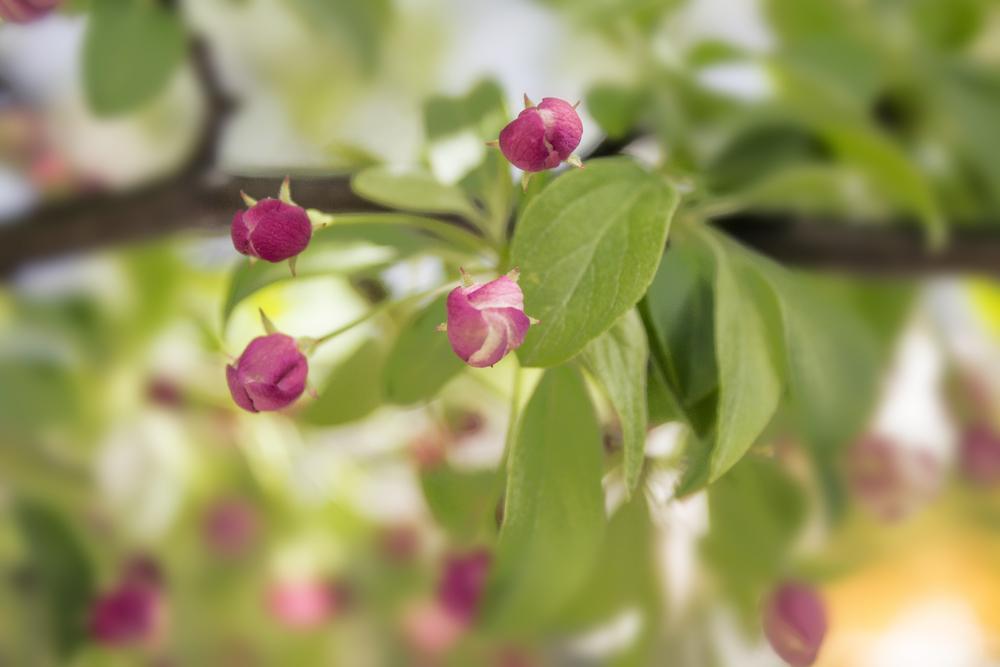 maliqi.little.blurred flowers.jpg